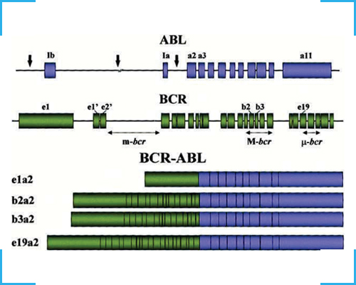 BCR ABL Quantitative PCR Kit